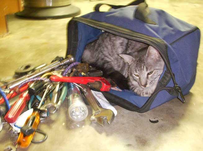 tool-cat